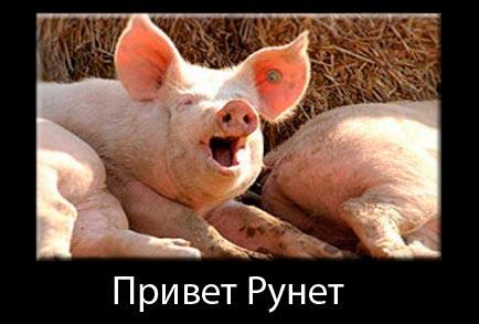 Свинарник Рунет
